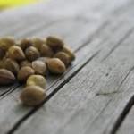 konopne semienka